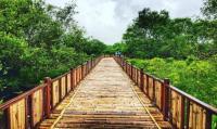Wali Kota Liverpool Berburu Foto Wisata Mangrove di Surabaya