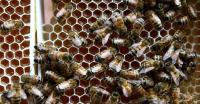 Organ Tubuh Ini Tersembunyi dalam Sistem Pencernaan Manusia hingga 5 Hal Menarik Tentang Lebah