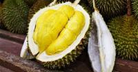 Berinovasi, Universitas Brawijaya Kembangkan Durian Unggulan Bontang