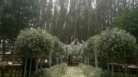 Intip Romantisnya Hutan Pinus Tempat Syahnaz dan Jeje Nikah