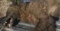Temuan Makhluk Misterius, Teori Mulai dari Manusia Serigala hingga Kerabat Bigfoot