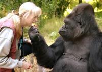 Koko, Gorila Pengguna Bahasa Isyarat Pertama Meninggal di Usia 46 Tahun