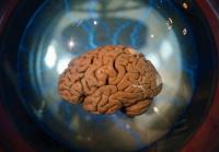 Tradisi Menyeramkan, Suku Fore Pemakan Otak Manusia