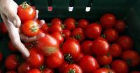Manfaatkan Tomat, Mahasiswa Ini Bikin Baterai Ramah Lingkungan