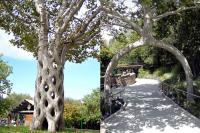 Di Dunia, Ini 5 Pohon yang Miliki Bentuk Aneh