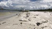 Ganggang Merah Picu Keadaan Darurat di Florida