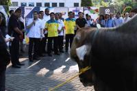 MNC Peduli Bersama Mitra Kerja Salurkan 537 Ekor Hewan Kurban
