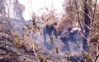 Pelaku Bakar Hutan Gunung Sindoro untuk Lahan Terong Belanda