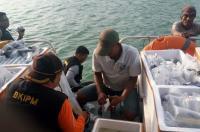 Benih Lobster Senilai Rp14 Miliar Dilepasliarkan ke Pulau Berhala