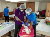 Tahun Ini Sudah 227 Kucing Jantan di Jakarta Timur Dikebiri