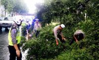 Petugas Evakuasi Pohon Tumbang di Jalan Jenderal Sudirman
