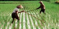 Sarjana Pertanian Ungkap Kondisi Terkini Ketersediaan Pangan RI