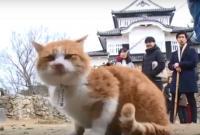 """Seekor Kucing Diangkat Menjadi """"Bangsawan"""" di Sebuah Kastel di Jepang"""