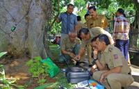 112 Pohon Besar di Jalan Kota Bogor Rawan Tumbang