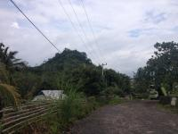 Cerita Gerombolan Harimau Menyerbu Perkampungan di Bengkulu
