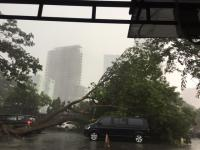 Angin Kencang Landa Surabaya, Pohon Tumbang Timpa Mobil