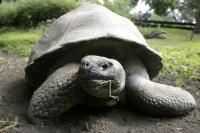 Kura-Kura yang Dikira Punah Terlihat di Kepulauan Galapagos