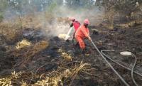 Kebakaran Lahan Riau Jauh dari Permukiman Warga