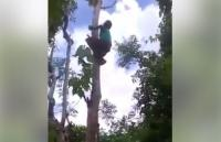 Viral Aksi Nenek Panjat Pohon Tinggi dengan Lincahnya Tanpa Alat Pengaman