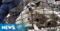 Kasus Anjing Rabies di Klungkung Bali Terus Bertambah