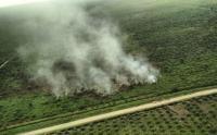 Kebakaran Hutan dan Lahan di Riau Capai 3.147 Hektare