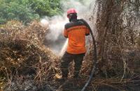 3 Pekan Belum Padam, Kebakaran Hutan dan Lahan di Rohil Meluas