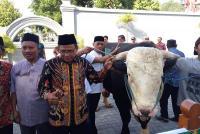 2 Sapi Jokowi Disembelih di Yogyakarta