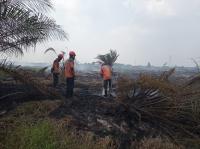 Polisi Tetapkan 10 Tersangka Pembakaran Hutan dan Lahan di Jambi