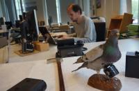 Burung Merpati Jadi Mata-Mata AS Selama Perang Dingin