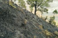 Kebakaran 18 Hektare Lahan Gunung Semeru Berhasil Dipadamkan
