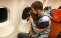 Seorang Pria Akali Aturan demi Kucingnya yang Kegemukan Bisa Naik Kabin Pesawat
