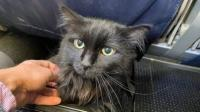 Hilang 5 Tahun, Kucing Ini Ditemukan 1.900 Km dari Rumahnya