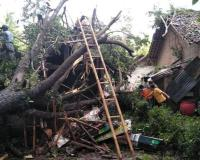 Hujan Angin, Puluhan Rumah Rusak dan Ratusan Pohon Tumbang di Yogyakarta