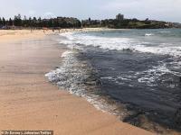 Abu Kebakaran Hutan Australia Membuat Pantai di Sydney Menghitam
