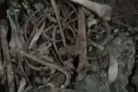 Polisi Temukan Tulang Belulang di Hutan Labuhan Lalang