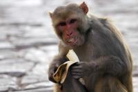 Pembawa Acara TV Mesir Diserang Monyet saat Wawancara Studio