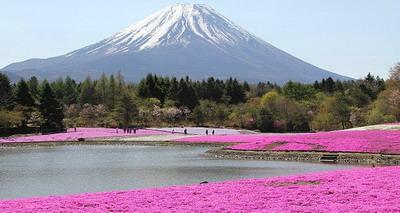 Taman Raksasa Ditumbuhi Lumut Pink
