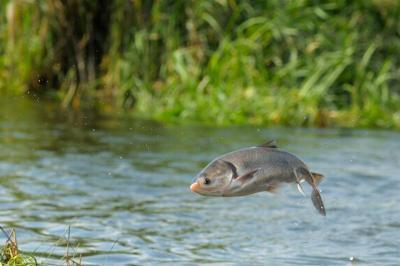 Ikan di Perairan ini Horny Massal, Ini Penyebabnya!
