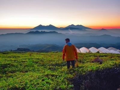 Destinasi Berburu Panorama Kabut yang Mempesona, Mulai dari Gunung Halimun hingga Bukit Kingkong Bromo