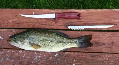 Tak Selalu Pakai Es Batu, Ikan Juga Bisa Segar dengan Cara Ini