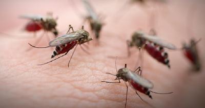 Februari-Maret Waspada KLB DBD, Simak Fakta Nyamuk yang Kecil tapi Mematikan!