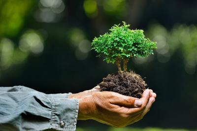 Cara Masyarakat Berau Peduli Hutan Demi Cegah Kerusakan Lingkungan