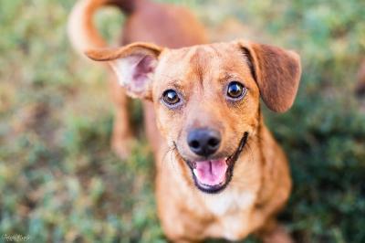 Ketika Anjing Tersenyum, Ini Penjelasan Ilmiahnya