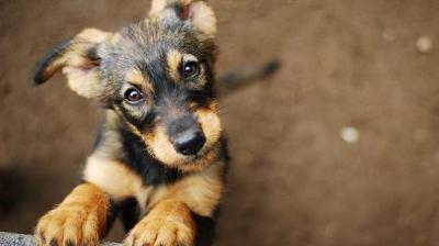 Viral Gadis Muda Masukkan Anjing ke Mesin Cuci