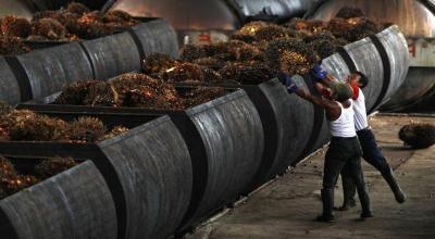 Di Depan Menko Luhut, BPK Beberkan Sejumlah Permasalahan Industri Kelapa Sawit