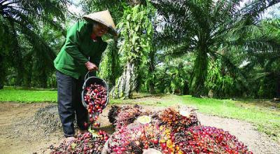 BPK Ungkap Sederet Masalah Sawit Indonesia