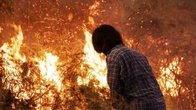 Gagalnya Perbaikan Lahan Gambut Dinilai Jadi Penyebab Kebakaran di Riau Meluas