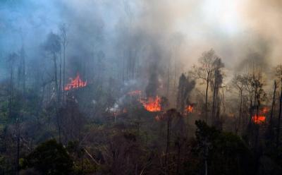 Walhi Nilai Pemerintah Lost Control hingga Terjadi Kebakaran Hutan Riau