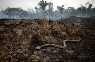Tak Hanya Tangkalaluk, Kalimantan Juga Punya Ular Gaib Nabau Sepanjang 80 Meter