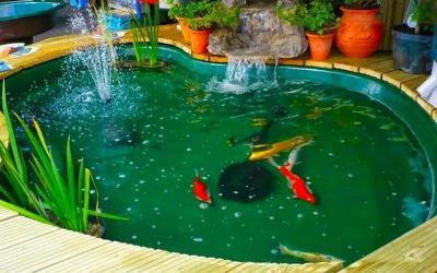 Ini 5 Hal yang Perlu Diketahui ketika Hendak Membuat Kolam Ikan di Rumah